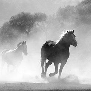 conscious-horse-conscious-rider